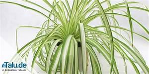 Zimmerpflanze Lange Grüne Blätter : pflegeleichte zimmerpflanzen 8 bl hende und gr npflanzen ~ Markanthonyermac.com Haus und Dekorationen