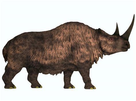 Woolly Rhino Prehistoric Mammals
