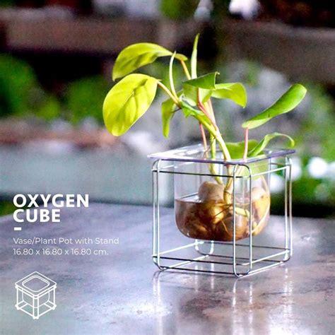 กระถางต้นไม้ Oxygen Cube (S) - Parinyashop
