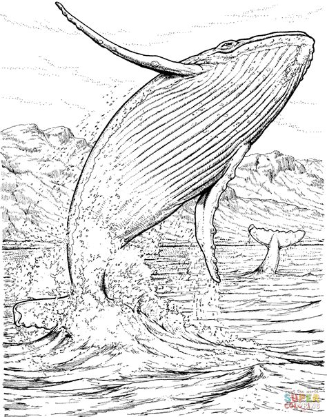 blue whale baby  seals coloring page  printable coloring shark coloring pages