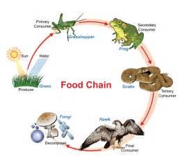 Autotroph Food Chain
