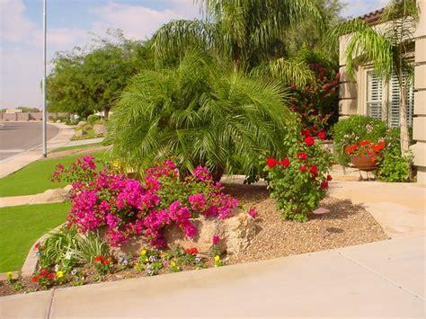 landscaping arizona sensational tropical phoenix landscaping plants desert crest press