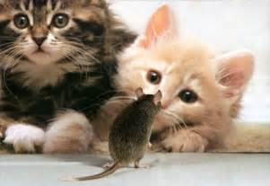 mouse for cats cat and mouse pictures animals