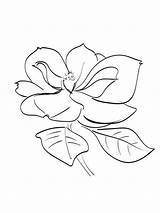 Magnolia Coloring Pages Flowers Flower Printable Template Recommended Mycoloring Colors sketch template