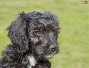 10 Popular Mixed Breed Dogs | Pets4Homes