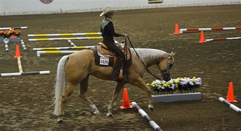 home palomino horse breeders association