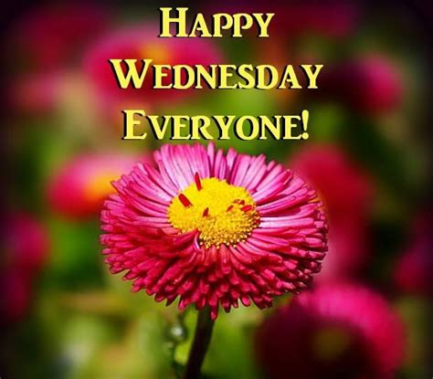 wednesday  images  quotes send scraps