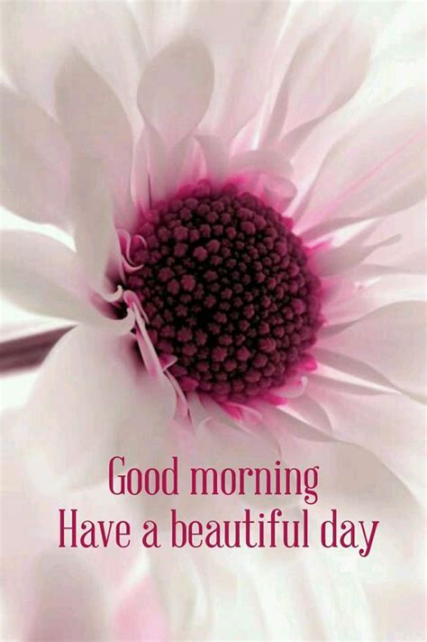 Good Morning Have A Beautiful Day Flower Quote Pictures ...