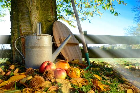 Garten Gestaltung Im Herbst by Gartengestaltung Im November Selber Machen Heimwerkermagazin