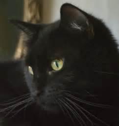 black cats with green black cats with green car interior design