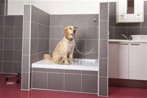 Hundedusche Selber Bauen by Shower Showers