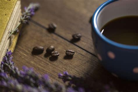 Gambar : warna lembayung muda romantis ungu biru bunga