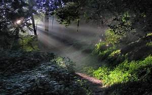 Nature, Landscape, Forest, Sun, Rays, Mist, Path, Trees, Shrubs, Morning, Sunlight, Green