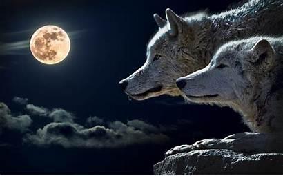 Wolf Moon January Blood Horoscopes Wolves Lunar
