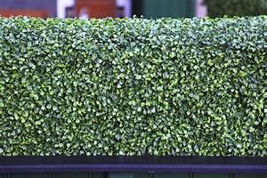 Haie Artificielle Pas Cher : brise vue vegetale artificielle brise vue cloture rigide ~ Edinachiropracticcenter.com Idées de Décoration
