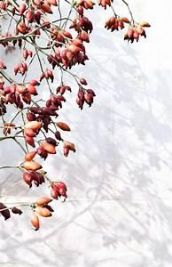 Guirlande Chambre Fille : guirlande d corative faire pour f ter l 39 arriv e de l 39 automne ~ Teatrodelosmanantiales.com Idées de Décoration