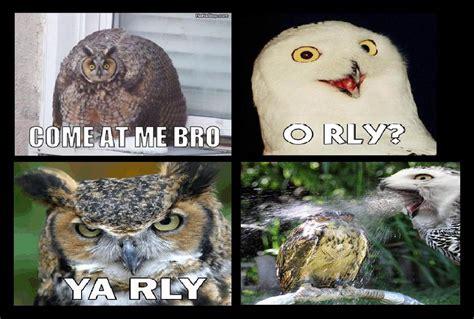 Meme Owl - owl meme comic by equinox029 on deviantart