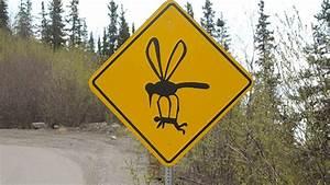 Road, Signs, Of, Alaska