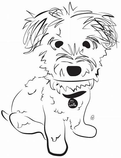 Dog Schnoodle Poodle Related Sketch Dogs Mix