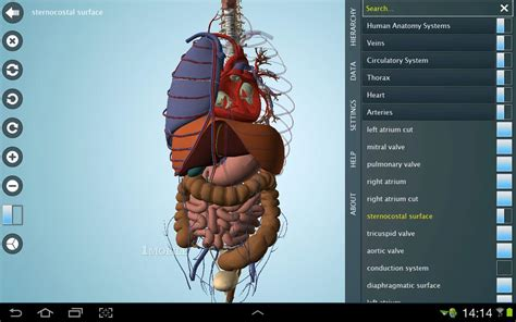 Download Free Cracked Anatomy 3d Pro Anatronica,free