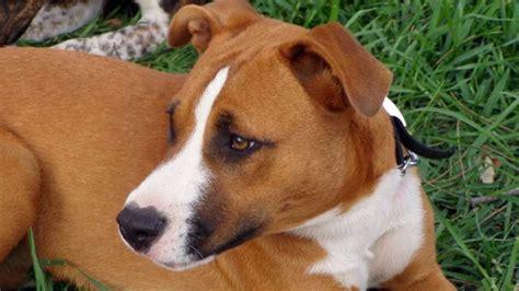 charities  stop animal cruelty  abuse