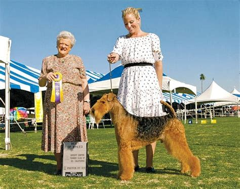 palm springs dog parks dog friendly locations palm springs