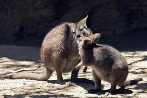 Free Always 4 You: 20 Amazing animal Kisses  Animal
