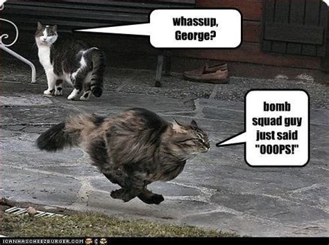 cat bomb dunster sammiedovakin quotes