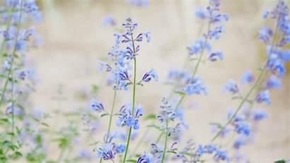 Flowers Desktop Wallpapers Widescreen Background