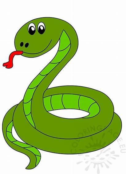 Snake Vector Illustration Animal Coloring Shaped Coloringpage