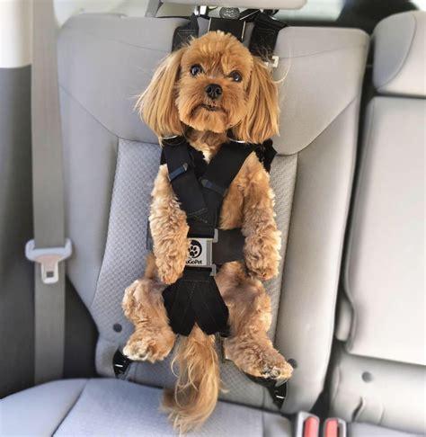 psbattle  dog car seat photoshopbattles