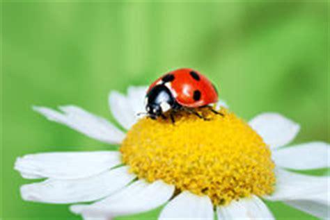 ladybug  daisy outline seamless pattern stock vector