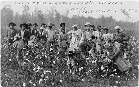 cotton planters file cotton planter and pickers1908 jpg wikimedia commons