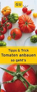 Tomaten Selber Anbauen : tomaten selber anbauen wir verraten euch praktische tipps tricks gu garten ratgeber ~ Orissabook.com Haus und Dekorationen