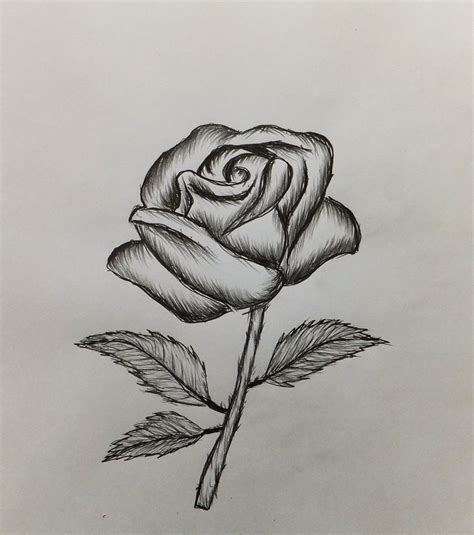 drawing roses  beginners   draw  rose easy