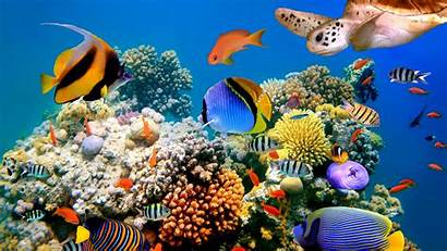 Coral Fish Colorful Animals Reefs Shoal Swimming