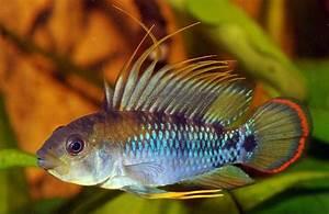 baenschi inka | Fish | Pinterest