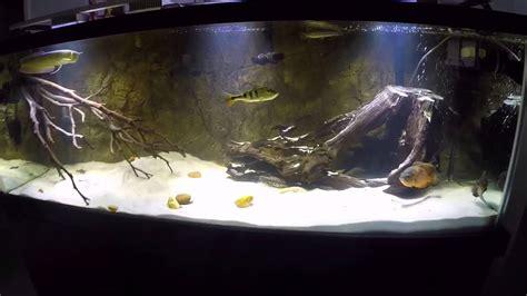 Amazon fish tank (South American Cichlids) YouTube
