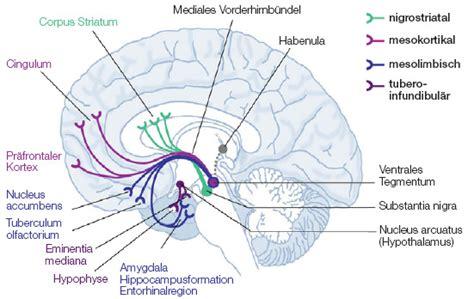 dopamin produktion