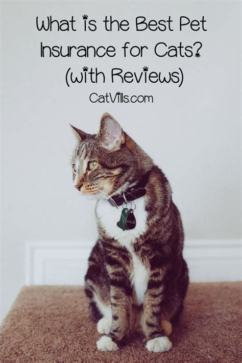 Article contents 3 what does pet insurance do for my cat? What is the Best Pet Insurance for Cats? (EXTENSIVE REVIEW GUIDE) | Best pet insurance, Pet ...