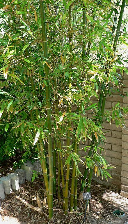 wann werden hortensien geschnitten den essigbaum schneiden phlora de