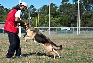 longoriahaus training philosophy longoriahaus dog With dog training houston