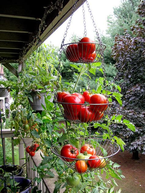 hanging vegetable garden 34 hanging vegetable garden ideas gardenmagz