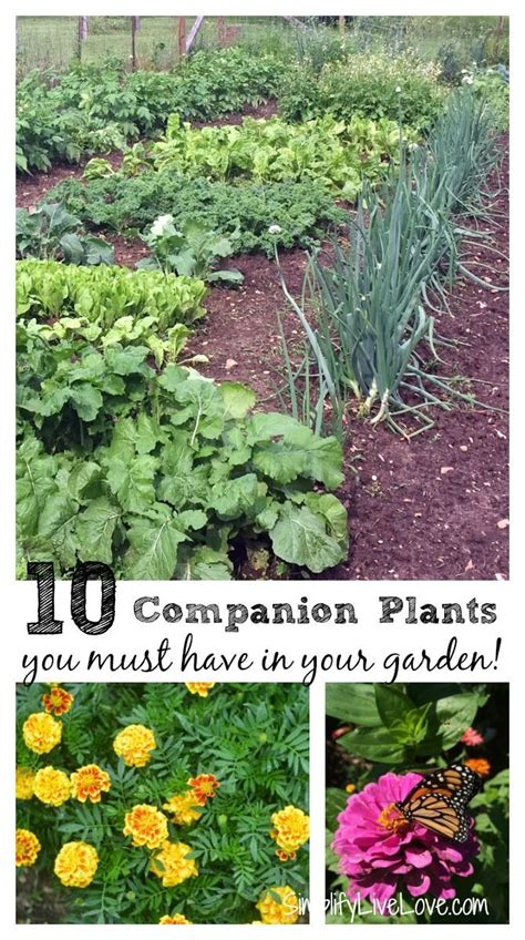 17 Best Images About Companion Planting On Pinterest