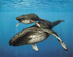 Veggie Revolution: We Saw One Humpback Whale: The Good and ...