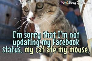 I'm sorry that I'm not updating my Facebook status, my cat ...