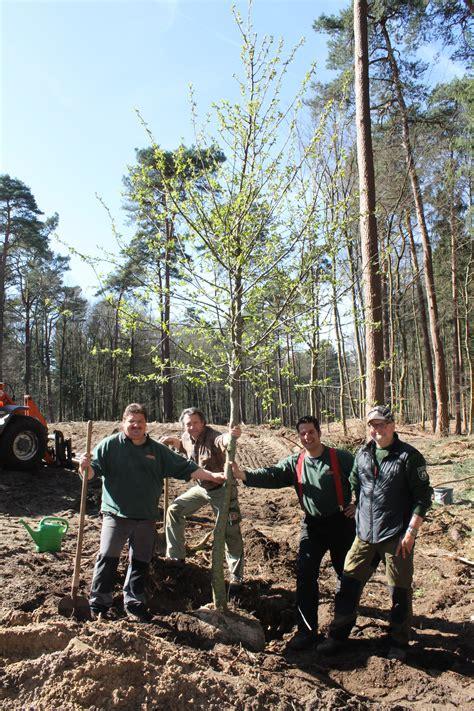 Neue Bäume Für Den Kurwald  Landesgartenschau 2017
