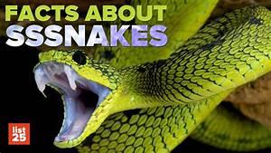25 SHOCKING Snake Facts - YouTube