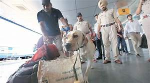 Punjab: Sniffer dogs help in recovery of 58 kg drugs | The ...
