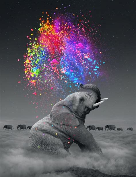 dreams in color elephant dreams in color rainbow digital